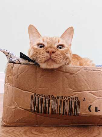 Waarom katten dol zijn op dozen